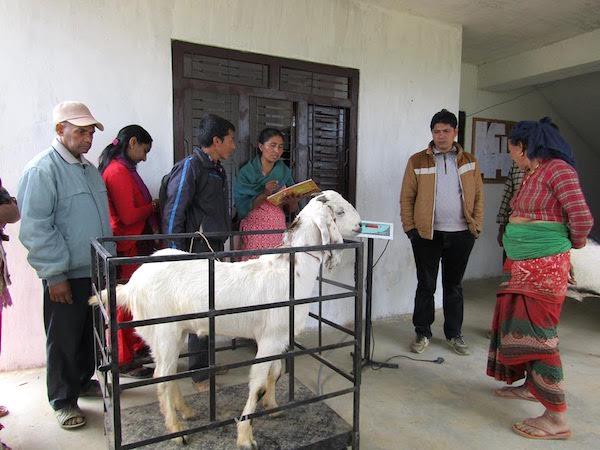 gulmi agriculture news