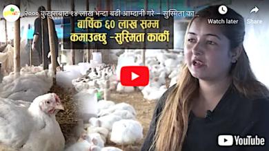 Photo of कुखुरा पालेरै वार्षिक ६० लाख रुपैँया कमाउँछु: सुस्मिता कार्की (भिडियो रिपोर्ट)