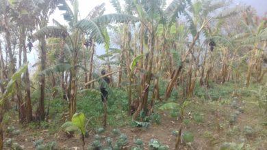 Photo of हाटबजार बन्द हुदाँ कृषि उपजले पाएनन् बजार