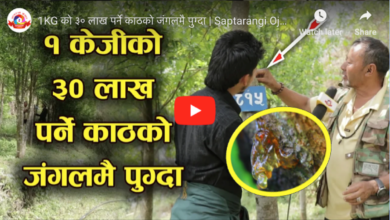 Photo of भिडियो: १ किलोकै ३० लाख रुपैँया पर्ने काठ, गुल्मीमा एक पुर्व लाहुरेको यो जंगलमा पुग्दा जे देखियो