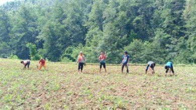 Photo of अर्घाखाँचीको मालारानीका किसानहरुलाई खेतीपातीमा भ्याई-नभ्याई