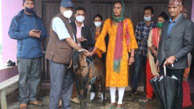 Photo of इस्मालाई बाख्राको श्रोत केन्द्रको रुपमा विकास गरिने, गाउँ–गाउँमा बिउ बोका वितरण