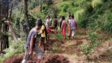 Photo of गुल्मीमा युवाहरु सामुहिक कृषि खेतीमा: २६ सय कागतीका बिरुवा रोपियो, छिट्टै पशुपालनमा पनि लाग्ने