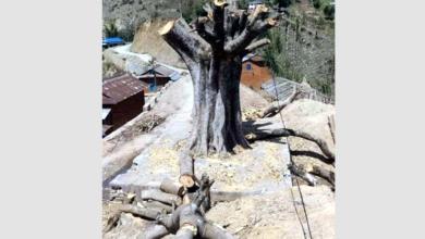 Photo of विकासका नाममा मासिँदै बर–पिपल