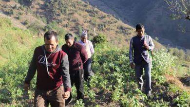 Photo of मदानेमा गरिएको बेमौसमी खेति कार्यक्रमका लागि कृषि ज्ञान केन्द्र गुल्मीले गर्यो अनुगमन