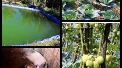 Photo of गुल्मीको हुँगामा स्मार्ट कृषि कार्यक्रमको प्रभाब: बिदेशबाट गाउँ फर्किएका युवा ब्यावसायिक कृषिमा